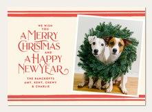 Festive Dog Card